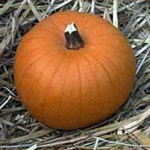 Halloweenkürbis Spookie